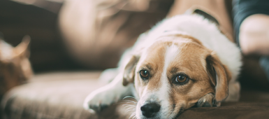 How to help your pets adjust to their new home