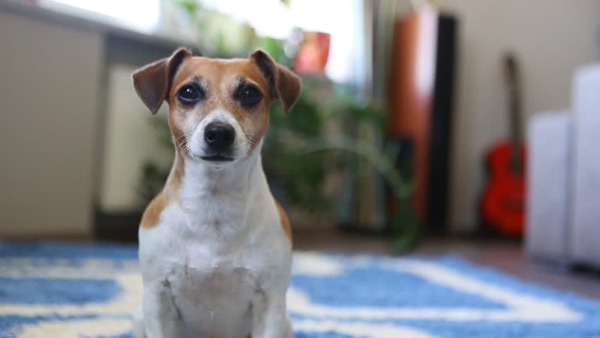 help dog puppy adjust to new home